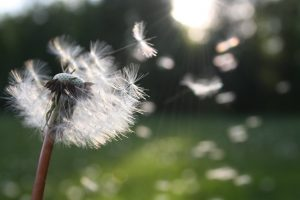 Here is a secret weapon to fight hayfever